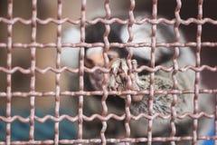 djur bur Arkivfoton