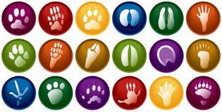 djur buttons spår Arkivbilder