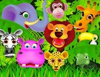 djur djungel Arkivbilder