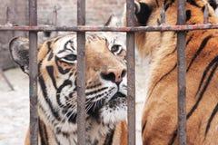 djur fångenskap Arkivbild