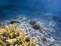 Djur för korallrev En vektorillustration Havsfisk i korall Royaltyfri Fotografi
