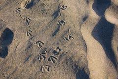 Djur fot avtryck på sand Arkivbilder