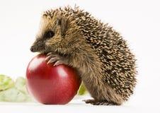 djur höst Fotografering för Bildbyråer