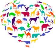 djur hjärta Arkivbilder