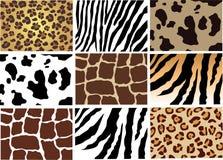 djur hud Royaltyfri Foto