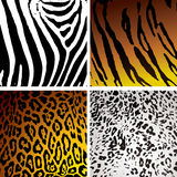 djur hudvariation Arkivbild