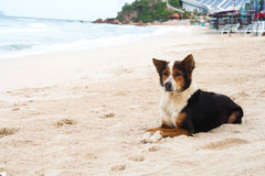 Djur hund Arkivfoton