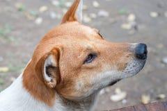 Djur hund, en manbästa vän Arkivbild