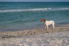 Djur hund på havsbakgrunden, på stranden, sandhavshav Royaltyfri Bild