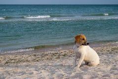 Djur hund på havsbakgrunden, på stranden, sandhavshav Royaltyfri Fotografi