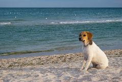 Djur hund på havsbakgrunden, på stranden, sandhavshav Arkivfoto