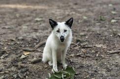 djur i den lösa naturen Fotografering för Bildbyråer