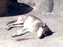 Djur i en zoo Fotografering för Bildbyråer