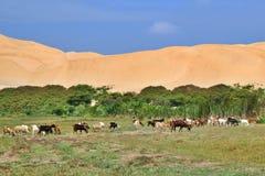 Djur i oasen Peruansk öken arkivfoto