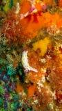 Djur i uppehället för korallrev på en sten royaltyfri bild