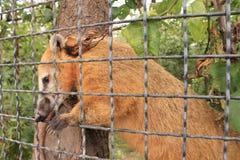 djur i zoo Arkivbilder