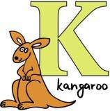 djur K känguru för alfabet Arkivbild