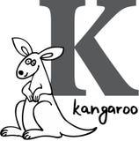 djur K känguru för alfabet Royaltyfri Bild
