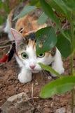 djur katt Fotografering för Bildbyråer