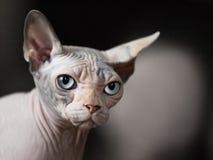 djur katt Royaltyfri Foto
