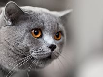 djur katt Royaltyfria Foton