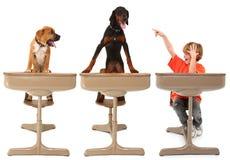djur klassrumhund Arkivfoto