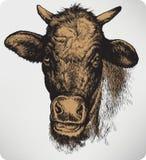 Djur ko, hand-teckning också vektor för coreldrawillustration Arkivfoton