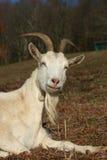 djur lantgård royaltyfri bild