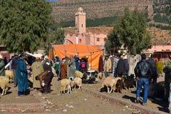 Djur marknad i den Marocko byn royaltyfri bild