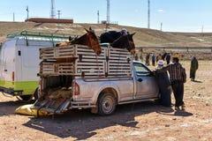 Djur marknad i Marocko fotografering för bildbyråer
