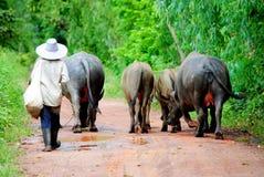 Djur och herde Arkivfoto