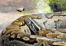 Djur - orm Arkivfoto