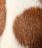 Djur pälstexturbrunt och vit Royaltyfria Foton