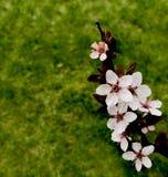 Djur pälstexturbrunt och vit Royaltyfria Bilder
