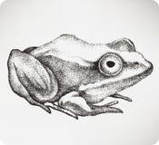 Djur padda, hand-teckning också vektor för coreldrawillustration jpg Royaltyfri Foto