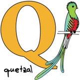 djur q quetzal för alfabet Royaltyfria Bilder
