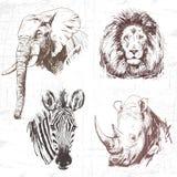 Djur runt om världen (Afrika) Arkivbild
