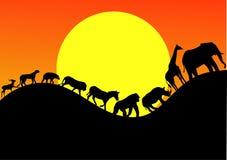 djur safarislhouette Royaltyfri Bild