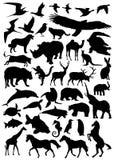 djur samlingsvektor royaltyfri illustrationer
