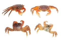 djur set för samlingskrabbaskaldjur Royaltyfria Bilder