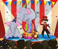 Djur show på cirkusen Arkivbilder