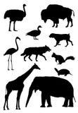 djur silhouette tio Arkivbilder