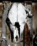 djur skalle Royaltyfri Foto