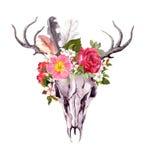 Djur skalle för hjortar - blommor, fjädrar Vattenfärg i tappningstil Royaltyfri Fotografi