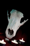 Djur skalle i cirkeln av stearinljus - en magisk ritual Arkivfoton