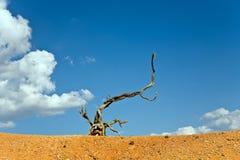 djur skapade diagram som trä för naturen ut Arkivfoto