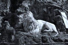 djur som det är den täta lionen, gjorde parkbildsafari till mycket Arkivfoton