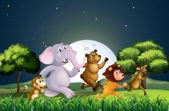 Djur som mitt i natten går royaltyfri illustrationer