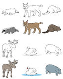 djur ställde in sex Royaltyfri Fotografi