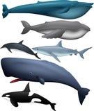 Djur stor fisksamling Royaltyfria Bilder